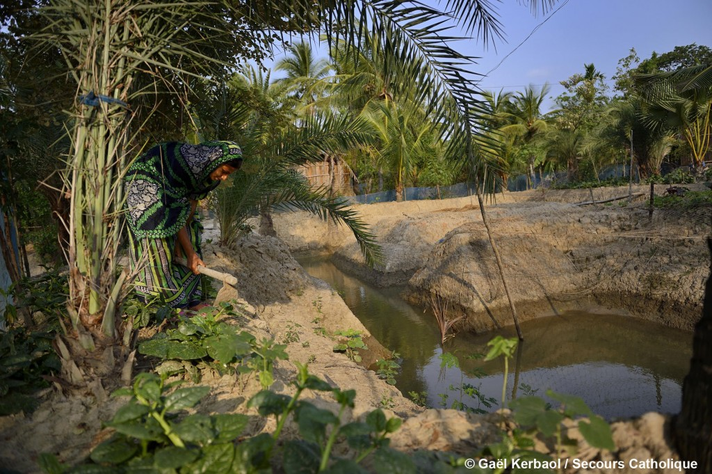 La douve creusée grâce à l'aide de la Caritas locale, permet de réduire la salinité de l'eau et offre à Sajida Khatun la possibilité d'améliorer sa récolte en mettant en place un système de fertilisant organique.  Elle produit désormais suffisamment pour sa consommation familiale et peut vendre le surplus au marché local.
