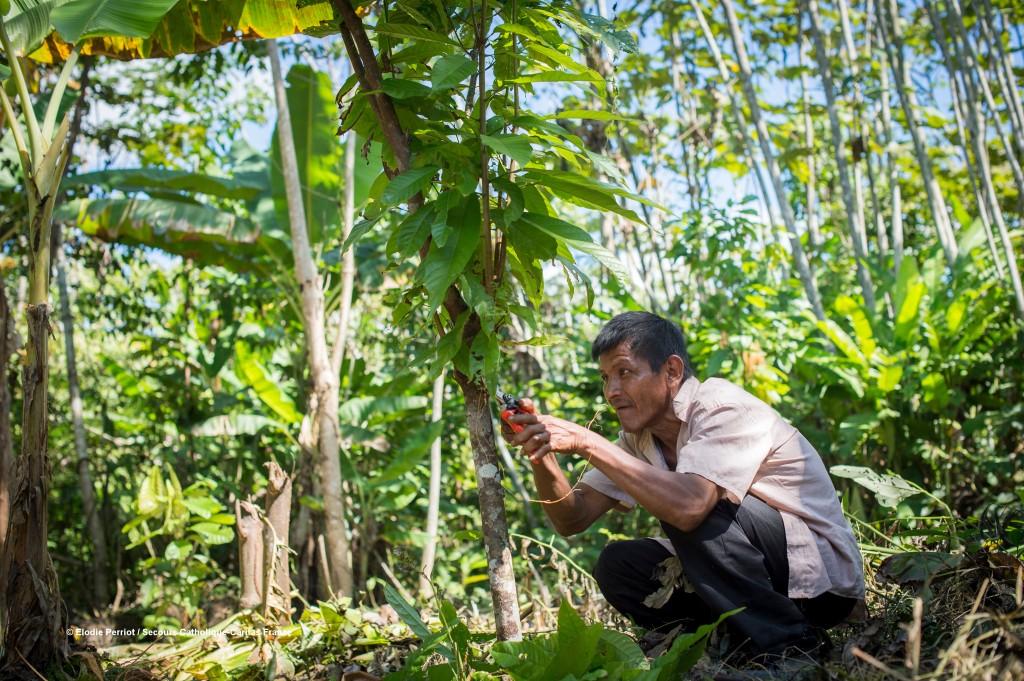 En Bolivie, Cipca, partenaire du Secours Catholique-Caritas France, forme les populations vivant en forêt amazonienne à un système agroforestier permettant une exploitation respectueuse, écologique de leur terre menacée par les entreprises multinationales.