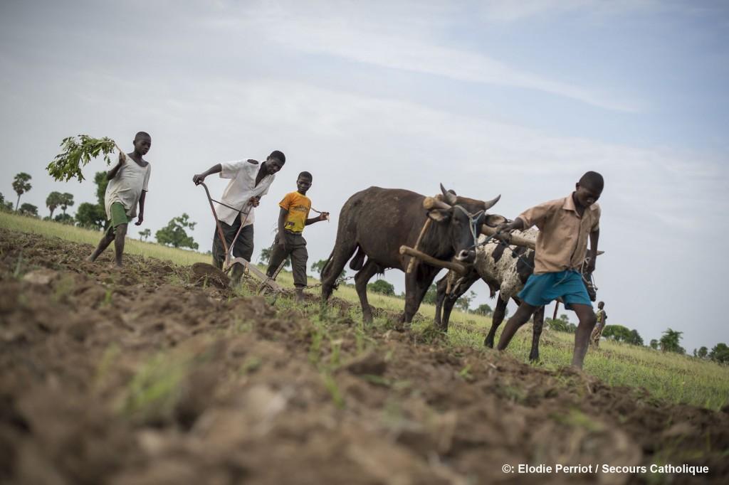 Togo – Dapaong : La Jarc ( Jeunes Adultes Ruraux Catholiques ), partenaire du SC, accompagne les villages à l'amélioration de leurs conditions de vie en leur proposant des formations agricoles. Nakpejja GANGUE a participé à 7 formations dont la « culture attelée » il est parvenu à s'acheter un 2è bœuf. Aujourd'hui, il laboure son champ en 3 jours au lieu de 4 semaines auparavant. Avec l'argent rassemblé, il a construit une maison en dur et met à l'abri de la faim tous les membres de sa famille.